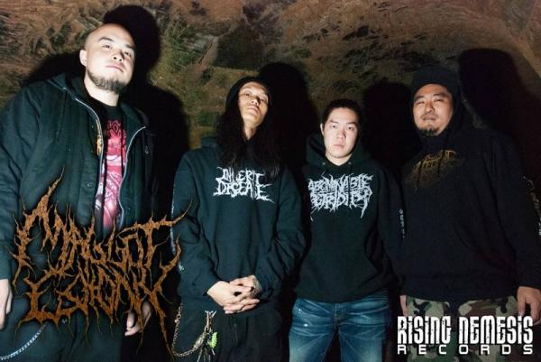 Maggot Colony - Discography (2013 - 2017)